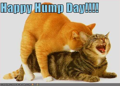 Hump Day! Get it?